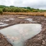 Charcas en la Laguna de Cospeito (1)