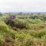 Imagen posterior a la tala de exoticas en Cospeito