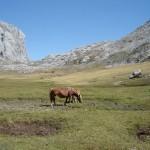 Liordes caballos