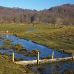 Turbera de Belate_encharcamineto producido por los diques